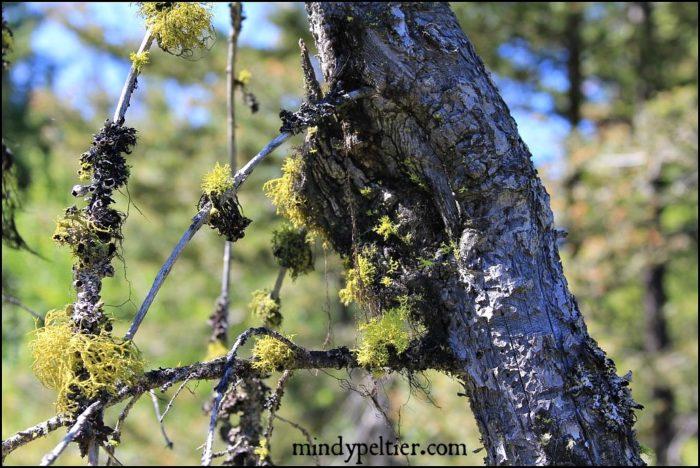 montana-moss-mindyjpeltier