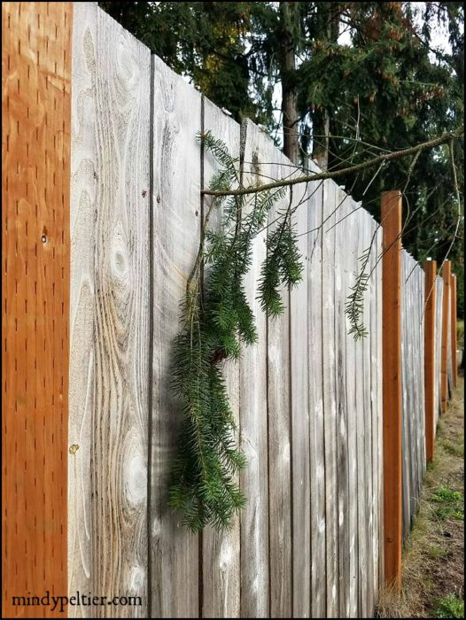 limb-in-fence-mindyjpeltier